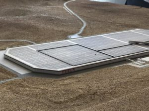 Environmental activists have stopped the construction of the Tesla plant near Berlin